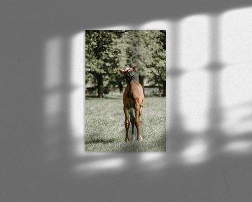 Fohlen auf der Weide von Tessa Dommerholt
