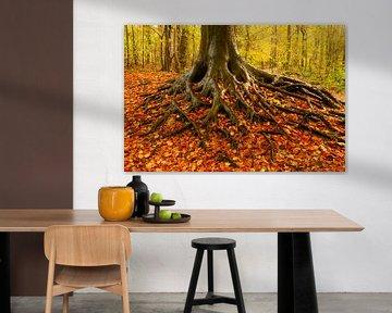 Prachtige boom in de herfst. van delkimdave Van Haren