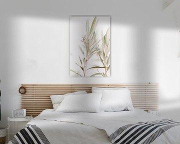 Olivenbaum   oklijtakken   Kunstfotografie von Lindy Schenk-Smit