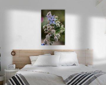 Paarse bloem | macro fotografie van Lindy Schenk-Smit