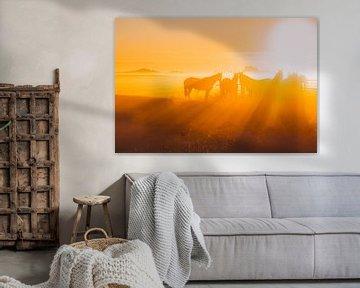 Paarden in de mist tijdens zonsopkomst