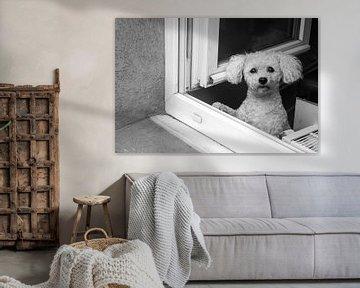 Doggy in the window von Arjan Bijker
