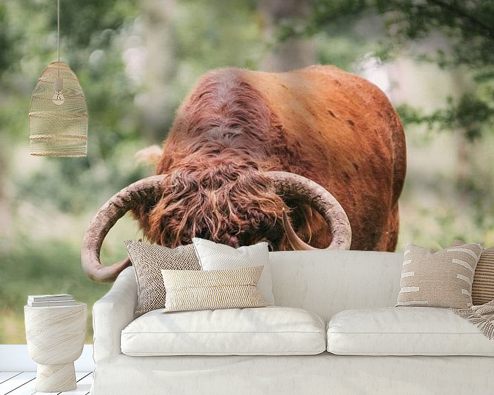 Sfeerimpressie behang: Schotse Hooglander Stier van Maria-Maaike Dijkstra