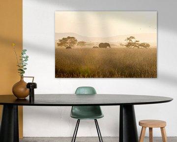 Elefanten bei Sonnenuntergang von Hege Knaven-van Dijke