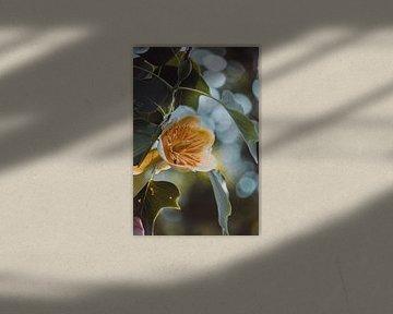 Tulpenbaum von Tessa Dommerholt