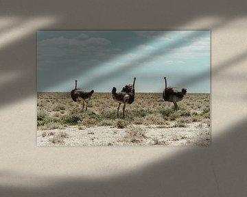 Struisvogels van Elien Van den Brande