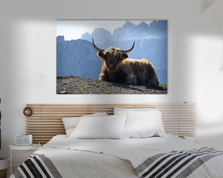 Sfeerimpressie: Schotse Hooglander in  bergketen Dolomieten van Michael Jansen