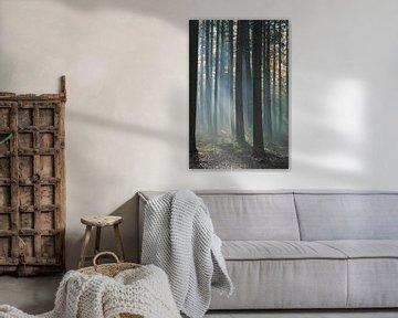 Bos in  zonlicht met nevel van Ideasonthefloor