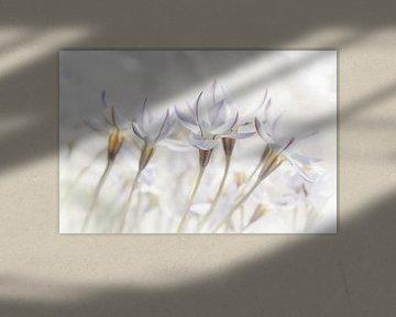 Weiße Blumen in zarten Farben von Ideasonthefloor