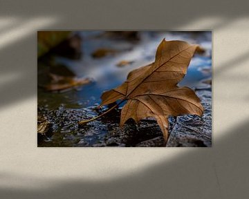 Het eenzame blad van Siemon Vanderhulst