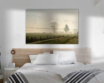 Tirant d'oie dans le brouillard du matin sur Ideasonthefloor