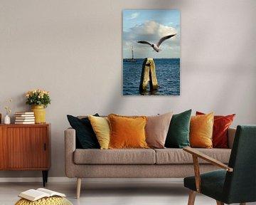 Möwe am Poller am Grevelingenmeer von Annelies Cranendonk