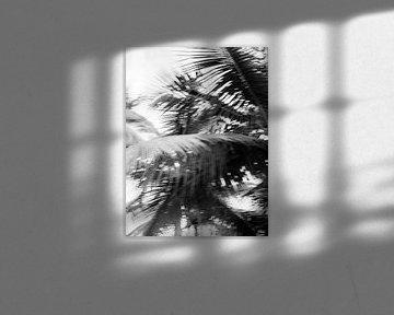 Palme in Schwarzweiß | Reisefotografie-Druck | Las Terrenas Dominikanische Republik von Raisa Zwart