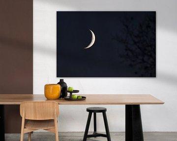 Zie de maan schijnt (bijna) door de bomen van Henk de Boer
