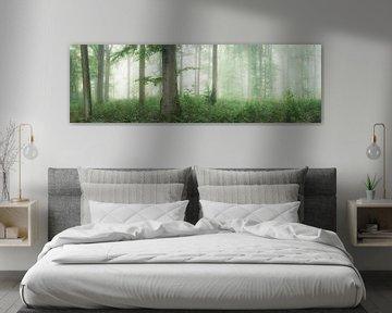 Panorama de la forêt