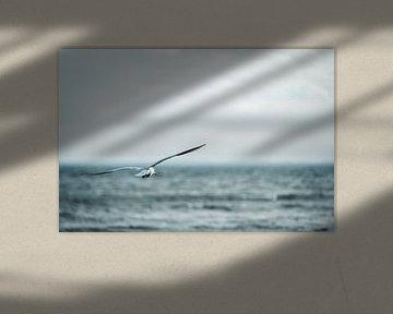 Ostsee Möwe von Pitkovskiy Photography ART