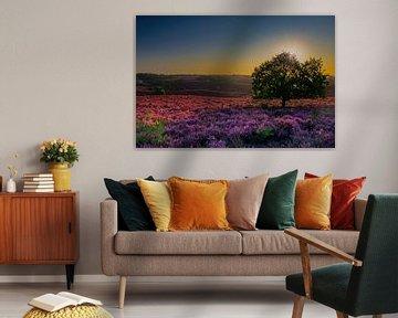 Bloeiende paarse heide van Dirk-Jan Steehouwer