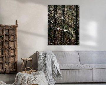Takken van dennenboom met oranje details van Laura-anne Grimbergen