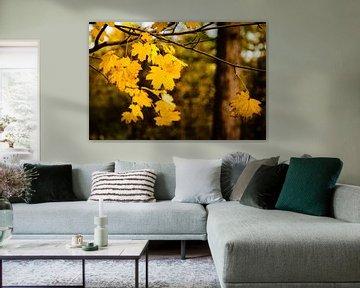 Laatste bladeren van de herfst van Linsey Aandewiel-Marijnen