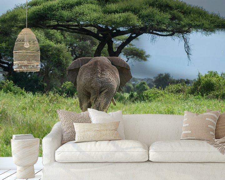 Beispiel fototapete: Afrikanischer Elefant von Alexander Schulz