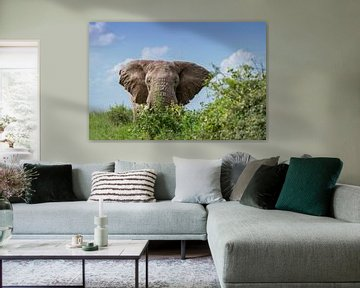 Oog in oog met een stier-olifant van Alexander Schulz