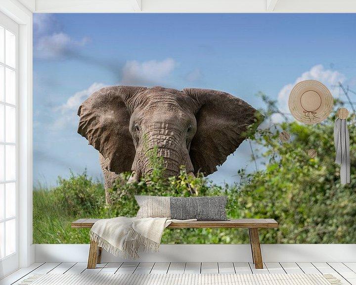 Beispiel fototapete: Auge in Auge mit einem Elefantenbullen von Alexander Schulz