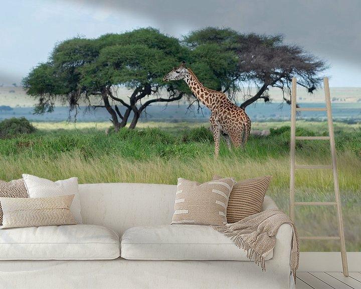 Beispiel fototapete: Massai Giraffe von Alexander Schulz