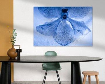 Witte orchidee, blauw getint, in ijs 3 van Marc Heiligenstein