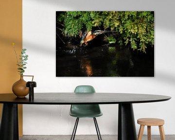 IJsvogel / Kingfisher van Henk de Boer