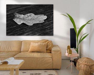Herfstblad in zwart/wit van FotoSynthese