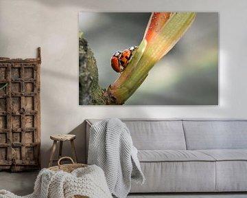 De liefde van de lieveheersbeestjes van Ronnie Reul