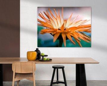 Orangenblume Nahaufnahme Makro-Fotografie von Art By Dominic