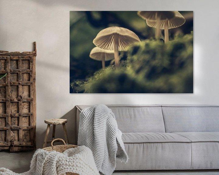 Impression: Champignons sur Hans Lunenburg