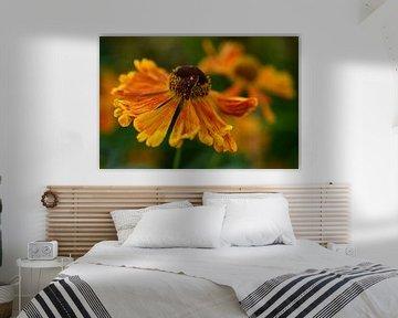 Schmetterling auf einer Blume von Sabine Claus