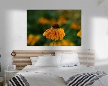 Orangene Blume von Sabine Claus