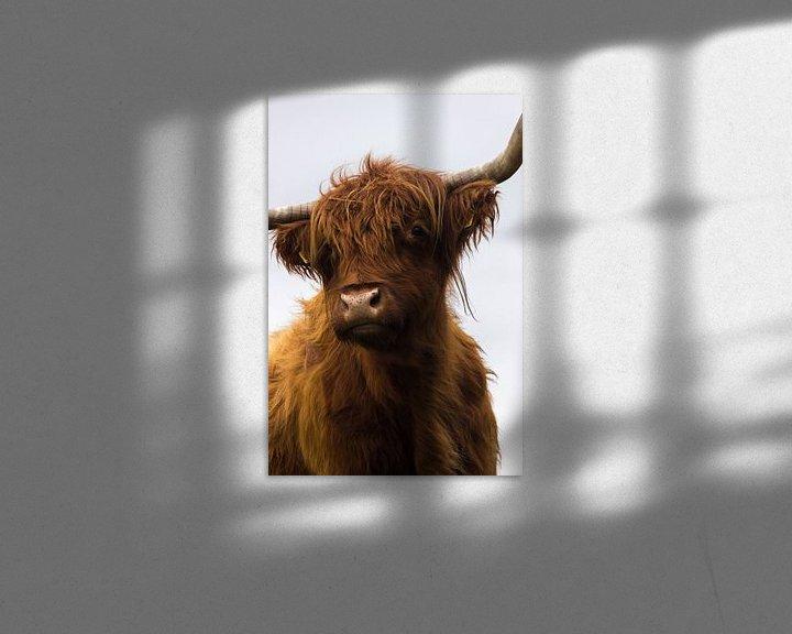 Sfeerimpressie: Schotse Hooglander van Nelleke Berrelkamp