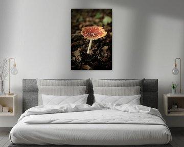Roter Pilz im Wald | Naturfotografie von Diana van Neck Photography