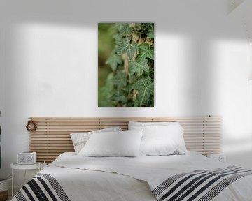 Wunderschöner grüner Klimop, der über den Baumstamm krabbelt von Diana van Neck Photography