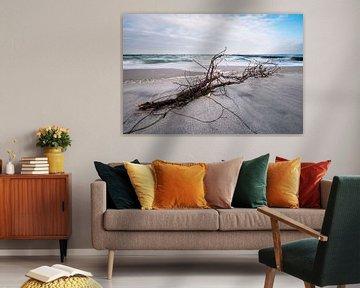 Treibholz an der Küste der Ostsee an einem stürmischen Tag von Rico Ködder