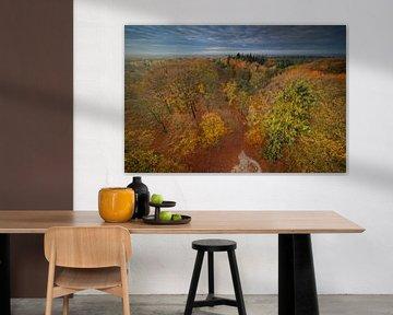 Utrechtse Heuvelrug en automne sur Dirk-Jan Steehouwer