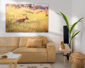 Fuchs von Andy van der Steen - Fotografie