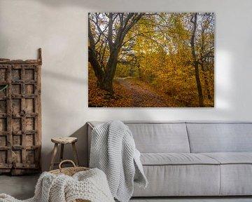 Herbstliche Farben im Wald