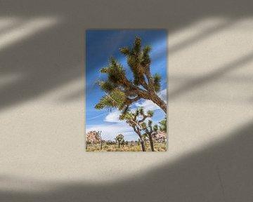 Impressie van Joshua Tree National Park van Melanie Viola