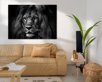 der Löwe schwarz-weiß von Bert Hooijer