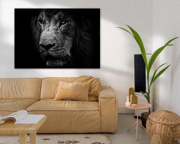 Der Löwe und schöne Schwarz-Weiß-Töne von Bert Hooijer