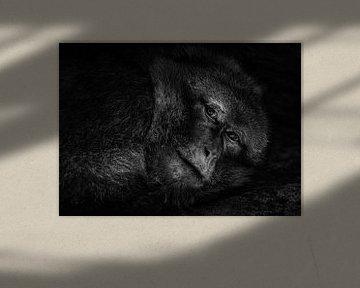 Der müde Affe von Vincent Willems