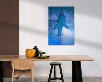 Hai von Patrick Brinksma