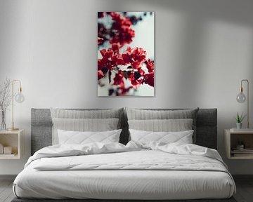 Rosa Blumen für einen blauen Himmel von AIM52 Shop