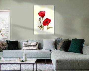 Mohnblüten von Sandra Steinke