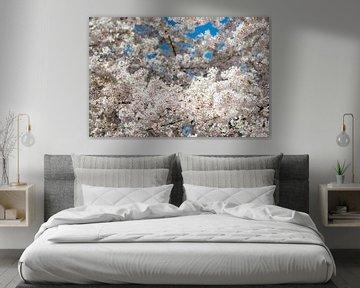 Sakura-Paradies von Remke Spijkers